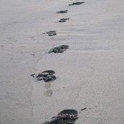 pasir karang bolong